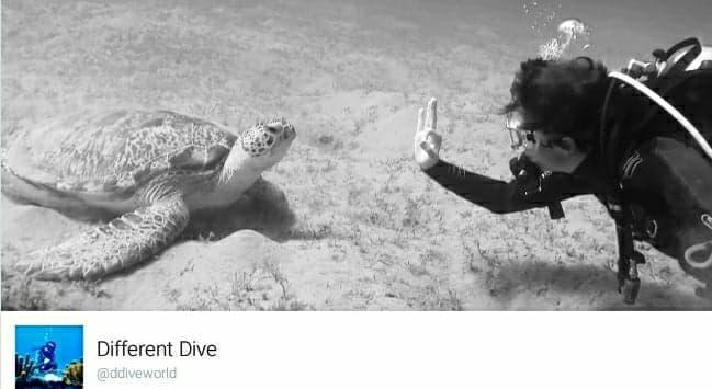stephanie koca, different dive, plongee, ice diving, tignes, marseille, plongee sous glace, job, facebook